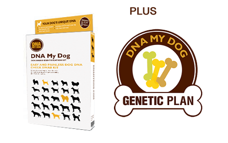 Top 5 DNA Tests for Dogs 8