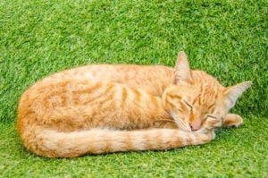 The Top 10 Most Affectionate Cat Breeds 5