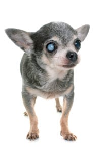 How Old is Your Dog? 6
