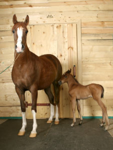 What you need to know about horse DNA Tests 4