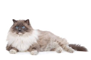 HCM testing in cats 4