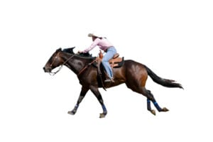 What you need to know about horse DNA Tests 3