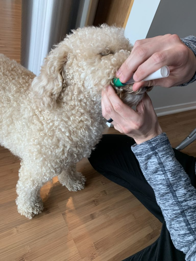 Embark Review: Doggy DNA testing from the comfort of home 14