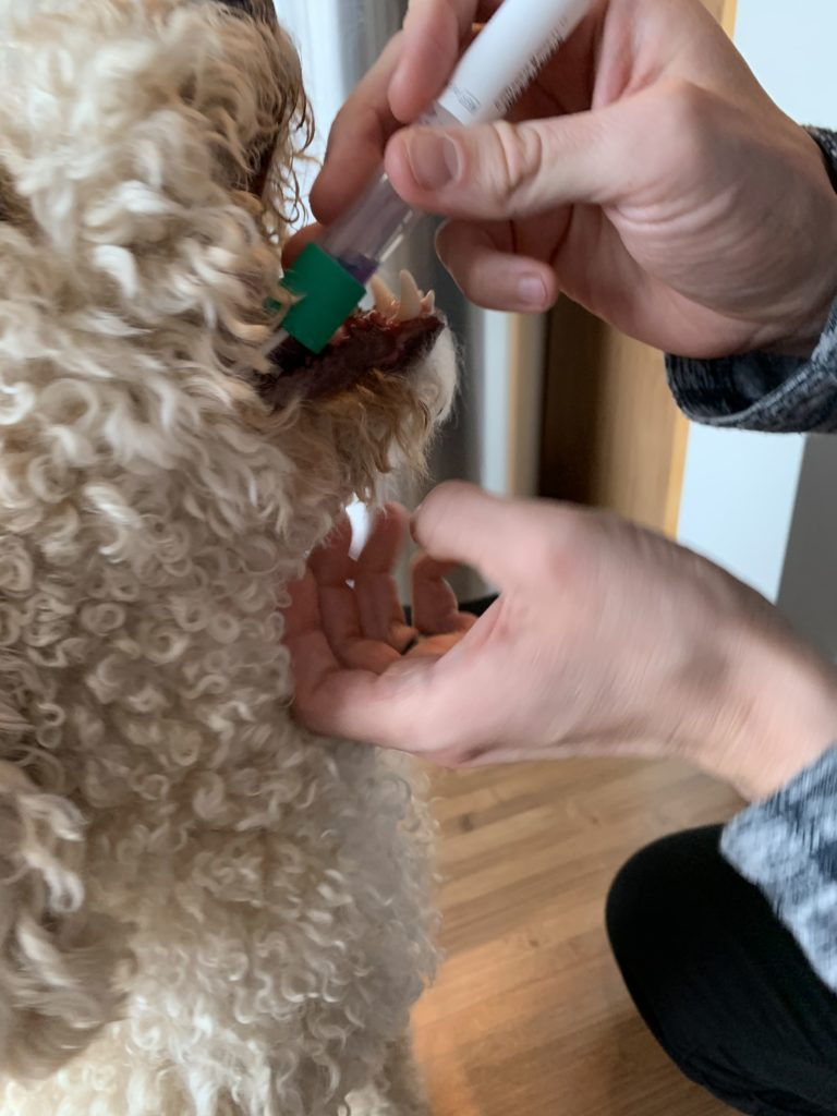 Embark Review: Doggy DNA testing from the comfort of home 16