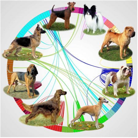 Top 4 DNA Tests for Dogs 7